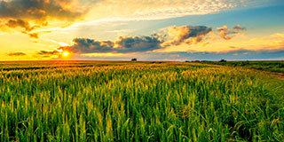 DuPont Microbial Crop Protection thumbnail