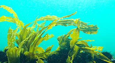 Ashland SeaStem™ thumbnail